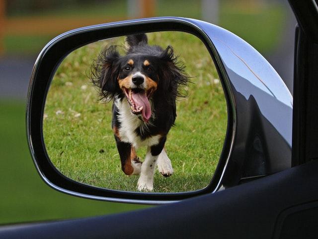 En hund i backspegel